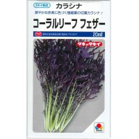 野菜種 からしな  コーラルリーフフェザー 20ml  タキイ種苗