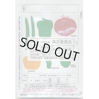 野菜種 西瓜  満天星西瓜  200粒  天理交配