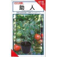 野菜種  台木用トマト 助人 100粒  カネコ種苗
