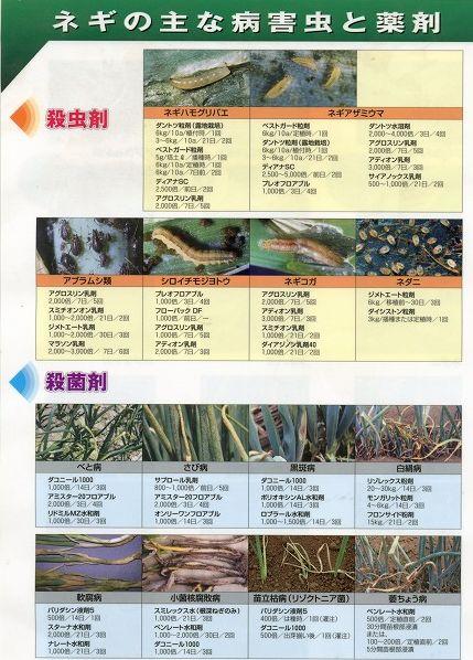 ネギの農薬