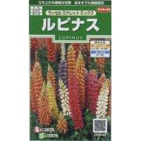 [花種/小袋] ルピナス ラッセルミナレットミックス 小袋 サカタのタネ