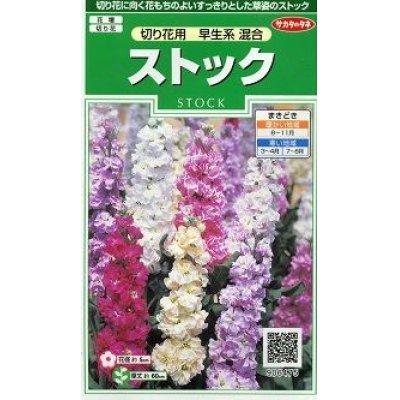 画像1: 花の種 オール1割引き! ストック 切り花用 早生系混合 小袋  サカタのタネ