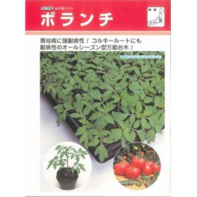 画像2: [台木/トマト用] ボランチ 50粒 タキイ交配