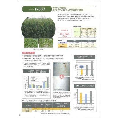 画像3: [緑肥] ライ麦 R-007 1kg  雪印種苗