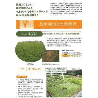 画像4: [緑肥] ライ麦 R-007 1kg  雪印種苗