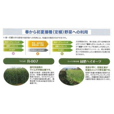 画像5: [緑肥] ライ麦 R-007 1kg  雪印種苗