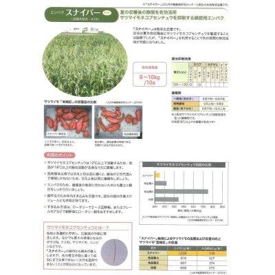 画像4: [緑肥] エンバク スナイパー 1kg   雪印種苗