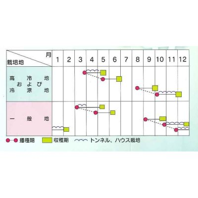 画像3: [中国野菜] 送料無料! チンゲンサイ 艶帝 2dl  サカタ交配