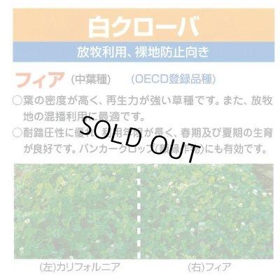 画像2: [緑肥] しろクローバ フィア 500g カネコ種苗