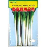 [ねぎ] 東京夏黒2号 20ml トキタ種苗