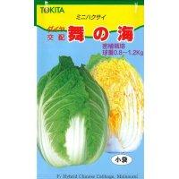 送料無料  白菜 舞の海 2ml  トキタ種苗
