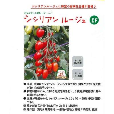 画像2: [トマト/マウロの地中海トマト] シシリアンルージュCF  8粒
