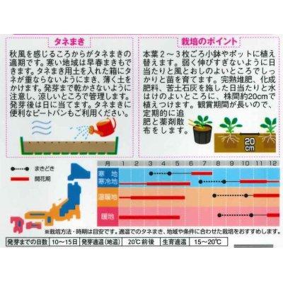 画像2: [花種/小袋] ビオラ ピエナ ローズブロッチ 20粒  サカタのタネ