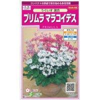 [花種/小袋] プリムラ マラコイデス 小袋 うぐいす混合