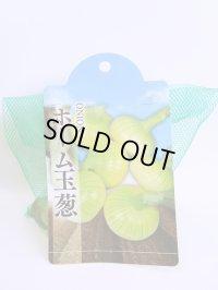 [たまねぎ] ホーム玉葱 トキタ種苗