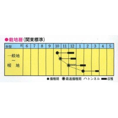 画像2: [小松菜] 秋冬のエース 2dl トキタ種苗