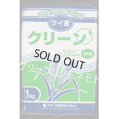 画像1: [緑肥] ライ麦 クリーン 1kg カネコ種苗