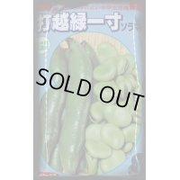 [そら豆] 打越緑一寸 1L サカタのタネ