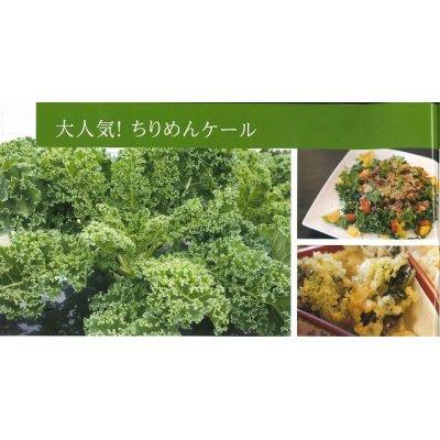 画像2: 送料無料  ちりめんケール コート種子30粒 松永種苗