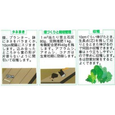 画像3: ベビーサラダ・ミックス 小袋 実咲 サカタのタネ