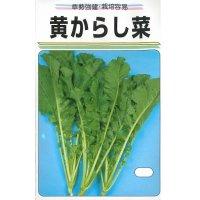 [葉物] 黄からし菜 20ml