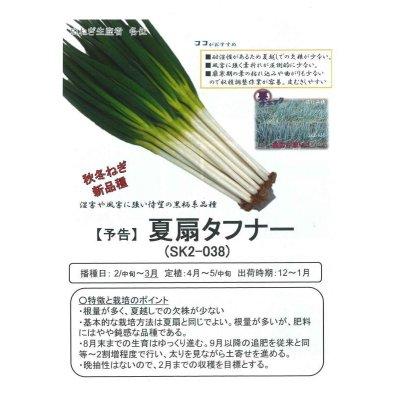 画像4: [ねぎ] 夏扇タフナー ペレット2L6000粒 サカタ交配