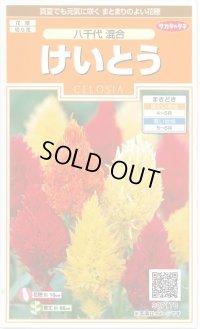 [花種/小袋]  けいとう 八千代混合 0.2ml 実咲 サカタのタネ