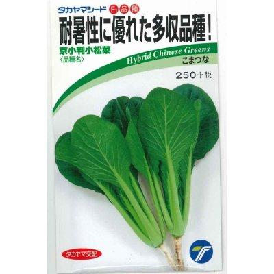画像1: [小松菜] 京小判小松菜 6ml  高農交配