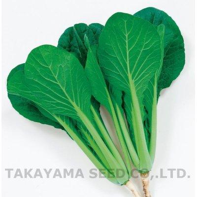 画像3: [小松菜] 京小判小松菜 6ml  高農交配