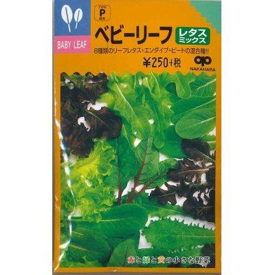画像1: [葉物]ベビーリーフ レタスミックス 20ml 中原採種場
