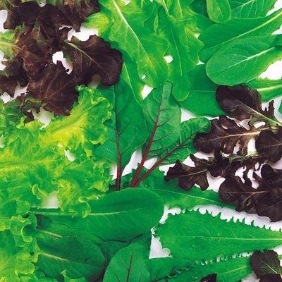 画像2: [葉物]ベビーリーフ レタスミックス 20ml 中原採種場