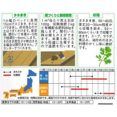 画像2: [セロリ] スープセロリ 小袋 実咲 サカタのタネ