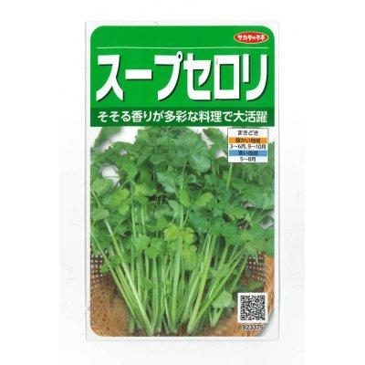 画像1: [セロリ] スープセロリ 小袋 実咲 サカタのタネ