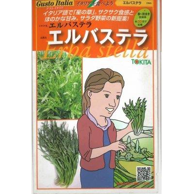 画像1: [イタリア野菜] エルバステラ 1000粒  トキタ種苗