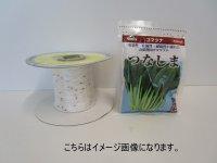 [シーダー種子] 小松菜 つなしま 1粒×5cm間隔