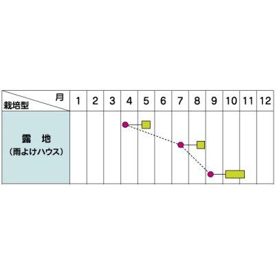 画像2: [シーダー種子] 小松菜 つなしま 1粒×5cm間隔