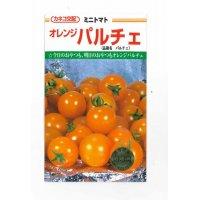 [トマト/ミニトマト] オレンジパルチェ 1000粒 カネコ交配