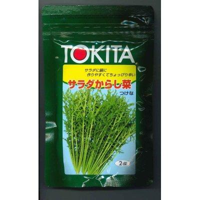画像1: [葉物] サラダからし菜 2dl     トキタ種苗