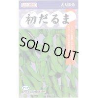 [枝豆] 初だるま 100粒 カネコ育成