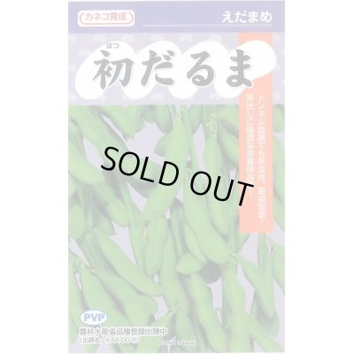 画像1: [枝豆] 初だるま 100粒 カネコ育成