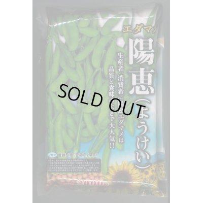 画像1: [枝豆] 陽恵 2000粒 カネコ育成