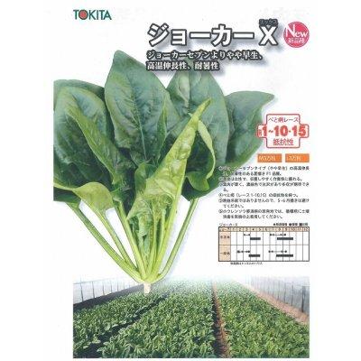 画像2: 野菜種 ほうれんそう ジョーカーX M3万粒 ダイヤ交配