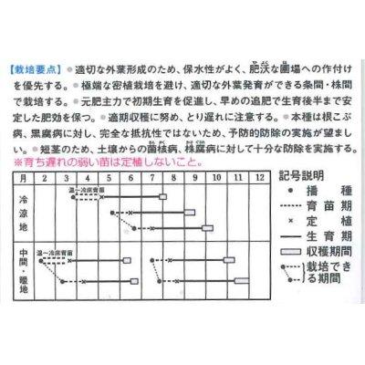 画像2: [キャベツ] BCR龍月 2000粒  タキイ交配