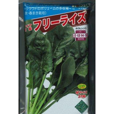 画像1: [ほうれんそう]  フリーライズ M3万粒 トキタ種苗