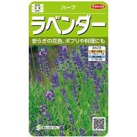 [ハーブの種]  ラベンダー 小袋(約60粒) サカタのタネ 実咲