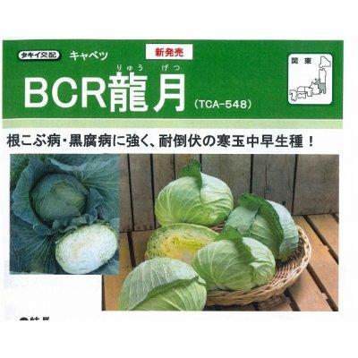 画像1: [キャベツ] 送料無料! BCR龍月 ペレット5000粒  タキイ交配