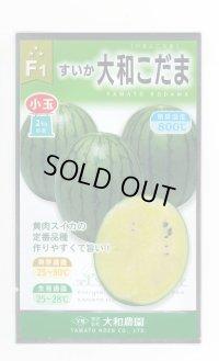 [スイカ] 大和こだま西瓜 (黄色) 200粒 大和農園