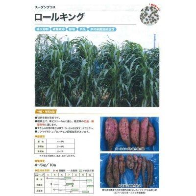画像2: [緑肥] スーダングラス  ロールキング 1kg カネコ種苗