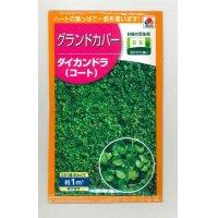 [景観形成作物] グランドカバー ダイカンドラ(コート)20ml タキイ種苗