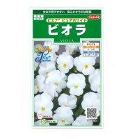 [花種/小袋] ビオラ ピエナ ピュアホワイト 20粒  サカタのタネ